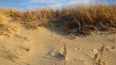 IMG_5379 (Martina Mastromonaco) Tags: beach vineyard martha s subset