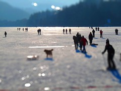 Tilt-shift of Lake Titisee (The Dog and the Camera and Me) Tags: blue schnee white lake snow black ice forest germany deutschland frozen miniature bokeh shift tilt baden schwarzwald feldberg tiltshift titisee wrttemberg hinterzarten