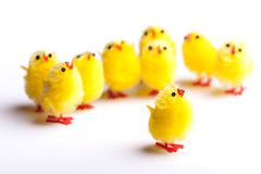 Chirpy (Mark J P) Tags: yellow easter toy toys chick fave chicks chirp tweet fav10 easterchicks diamondclassphotographer flickrdiamond
