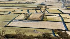 Drystone Walls (l4ts) Tags: winter field landscape frost sheep derbyshire peakdistrict farmland limestone drystonewalls whitepeak wardlow britnatparks wardlowhaycop