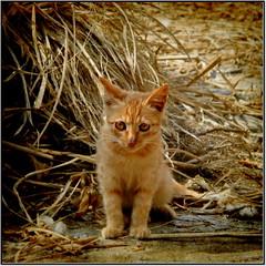 haystack's beside... (AA Dagital Photography) Tags: bestcapturesaoi asquaresuperstarstemple