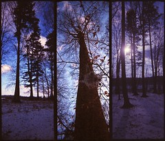 t r e e p t y c h (Der Ohlsen) Tags: schnee trees winter snow colour film analog 35mm germany deutschland triptych expired bume schleswigholstein c41 autaut agfacolorportrait160 silvercam pseudorama