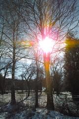 The Eye (romizaj) Tags: park blue winter shadow orange sun hot tree eye garden branch sigma heat sunbeam dp1