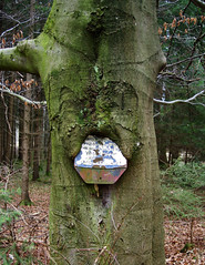 eating a sign 1 (Bilderschreiber) Tags: wood tree sign essen eating schild bark chewing rinde kauen hinweisschild borke wallung