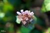 HBW! - Just B-weed-iful (∞ RedLoop ∞) Tags: flowers macro green beauty catchycolors spring blurry weed purple hbw happybokehwednesday ∞redloop∞ theateamrallyingforaurelia