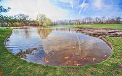 Koi (JMS2) Tags: lake fish gardens reflections pond wideangle exotic koi spout purchase pepsico westchestercounty swin