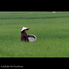 Rice field composition (Estebahn De Peschruse) Tags: voyage trip field composition canon eos asia rice good vietnam 7d asie carnetdevoyage goodcomposition maichau cnghaxhichnghavitnam pomcoong indochinapeninsula