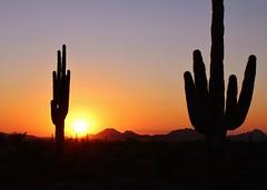 Phoenix Sunset - Explored (Photography Peter101) Tags: sunset arizona cactus nature sunrise canon
