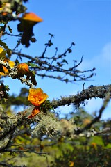 image (Eva O'Brien) Tags: sanfrancisco california goldengatepark park flowers plants flower botanical nikon botanicalgarden sanfranciscobotanicalgarden d3100 nikond3100 evacares evaobrien