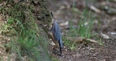 DSC07677rawcon_a (ger hadem) Tags: veluwe zwijn eekhoorn gerhadem