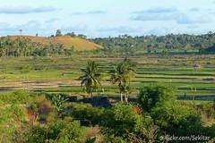 Sawah-sawah sekitar B'olou, Sawu Timur (Sekitar) Tags: indonesia landscape island pulau timur nusa ntt pemandangan sabu nusatenggara savu sekitar sawu bolou nusatenggaratimur earthasia sawahsawah