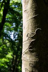 Zeichen (-BigM-) Tags: wood tree forest germany deutschland holz wald baum rinde pfalz deutsche weinstrasse