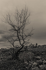 geol tree hdr (SeanHarperT) Tags: white black tree nature contrast outdoors blackwhite branches dramatic sillouette