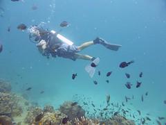 Koh Tao (Scuba Diving), Thailand (Jan-2016) 14-098 (MistyTree Adventures) Tags: ocean sea fish water coral thailand twins marine asia seasia underwater outdoor diving scubadiving diver kohtao gulfofthailand scubadiver panasoniclumix