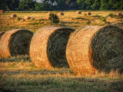 Evening Light on Round Bales (clarkcg photography) Tags: light sunlight field golden evening shadows harvest crop hay hayfield bales roundbales