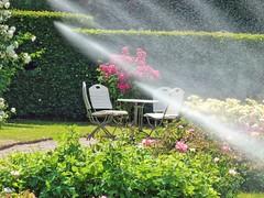 A Hot Summer Day at Baden-Baden 06 (MJWoerner49) Tags: roses summer spring badenbaden rosegarden watering cooling hedges summerday gnneranlage lichtentalerallee lichtentaleralley