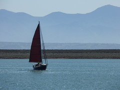 New Year Sails (Steve Taylor (Photography)) Tags: blue red newzealand mountain mountains boat haze sailing yacht sunny nelson canvas nz sail southisland tasman