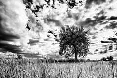 Gimli in the Lands of Rohan... (Ody on the mount) Tags: bw monochrome pflanzen wolken sw bume schwbischealb fototour anlsse