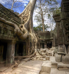 jungle temple cambodia (mariusz kluzniak) Tags: tree overgrown temple se ruins asia cambodia view sony south roots east jungle siem huge alpha incredible riep parasite 580 a580