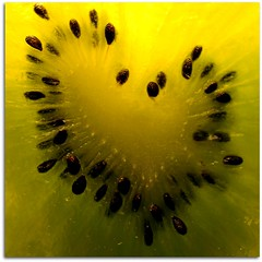 Un Amour de Coeur de Kiwi - Essai macro 1 (Vronique Delaux) Tags: winter france macro green love nature yellow closeup fruit jaune nikon colours flavor heart couleurs hiver coeur vert amour squareformat pulp kiwi vitamins sud 2012 carr saveurs hrault vitamines pulpe vroniquedelaux cratitudesnolimits