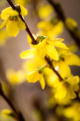 PhoTones Works #994 (TAKUMA KIMURA) Tags: plant flower nature small    kimura ep3 takuma    zd1260 photones