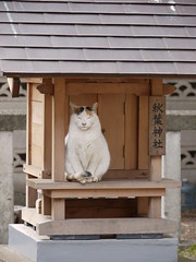 Bastet in Japan!! (-sou-) Tags: japan cat funny shrine god calico stray calicocat straycat bastet kamisoshigaya shinmeisha    akibajinja