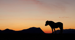 Horse in sunset (Gjeewaytee) Tags: sunset sky horse sun black color colors norway clouds dark evening heaven hest ulsteinvik fjording ulstein nofk