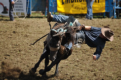 Urenui Rodeo 2012 (19) (picskiwi) Tags: rodeo taranaki urenui nikond90 nikkor55300mmf4556