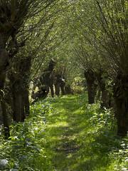 Dit willen we nu........ (Dimormar!) Tags: summer groen zomer rhoon knotwilgen albrandswaard rhoonsegrienden