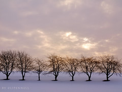 trees in the winter snow (olipennell) Tags: tree deutschland baum weinsteige beutelsbach exoticimage landbadenwurttemberg rockpaperexcellence