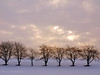 trees in the winter snow (olipennell) Tags: tree deutschland baum weinsteige beutelsbach exoticimage landbadenwürttemberg rockpaperexcellence