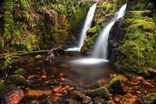 Dartmoor tropical waterfalls