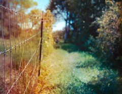 sunshine come on back another day, I promise you I'll be singing (sparkleplenty_fotos) Tags: family red summer color green grass sunshine yellow fence vineyard rainbow wire peace bokeh walk happiness barbedwire marthasvineyard processed cliche sliders hss hcs bokehpeople happyclichesaturday happysliderssunday