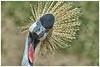 Odd Bird (Angelo Bufalino - AirTeamImages) Tags: bird zoo nikon denver nikkor 7020028 vrii d700