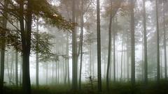 Twilight (Hannes Mauerer) Tags: trees tree nature fog germany landscape twilight nebel forrest turtle natur gras grn landschaft wald baum mauerer jmauerer