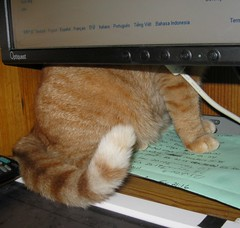Tech support finally arrived! (Hairlover) Tags: pet cats pets public cat kitten kitty kittens kitties allcatsnopeople