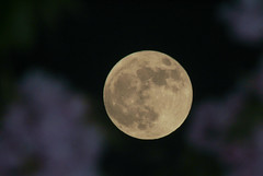Supermoon in front of the cherry trees (Paul T. Marsh/PositivePaul) Tags: flash fullmoon 800mm fujis3pro wwwpaulmphotographycom paulmarshphotography supermoon tamron2xconverter nikon400mmf35ais