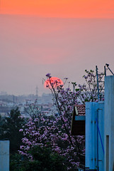 one evening.. (ranjini.v) Tags: flowers houses sunset tree clouds nikon d60 ranjini frommybalcony