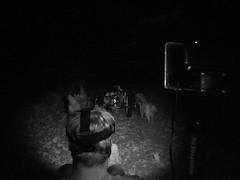Rhett Driving WooFDriver & WooFPAK Leading