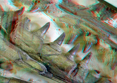 Jaws Mosasaurus 3D