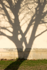 Tangle (DaveLawler) Tags: morning shadow tree wall pentax tangle worcester k3 smcpfa50mmf28 wpiedu