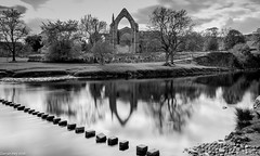 Step This Way! (dazzbo1) Tags: longexposure stones reflection spooky atmosphere serene beautiful abbey ruins river bolton yorkshire dales water cloud sky calm silk smooth tree