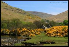 Ruined Cottage (zweiblumen) Tags: uk scotland alba isleofarran lochranza polariser northayrshire eileanarainn canoneos50d zweiblumen