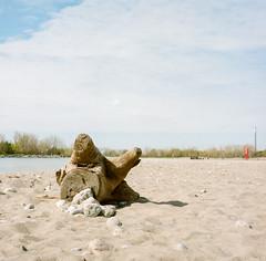 Woodbine Beach, Toronto (marysmyth(NOLA13) ) Tags: 6x6 film beach mediumformat log sand rocks lakeontario sqaure kodakportra400 woodbinebeach rolleiflex28eplanar