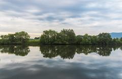 Neckar reflections (maikepiel) Tags: trees sky reflection water clouds river germany wasser himmel wolken fluss bume spiegelung neckar neckarhausen edingen