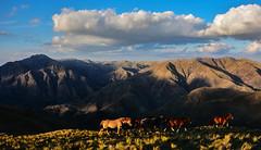 CABALLOS EN LAS SIERRAS (Marina Balasini) Tags: travel blue sky horse naturaleza mountains nature argentina caballos bay natural explore cielo serenidad