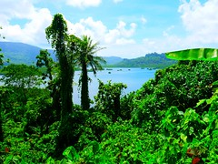 Pohnpei, the second most rainful island in the world after Kauai, Hawaii.