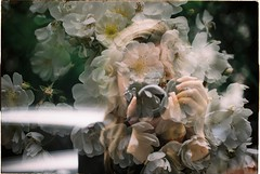 self (habologique) Tags: girl woman hair botany botanical garden flora floral greenery plants bratislava slovakia botanicka zahrada analog analogue film 35mm kodak color plus 200 nikon nikonf3 no photoshop unedited grain kodakphoto portrait nature people greenhous double doubleexpo exposure multiple