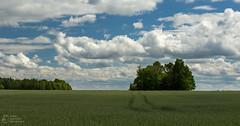 (klgfinn) Tags: summer sky cloud tree field grass skyline landscape