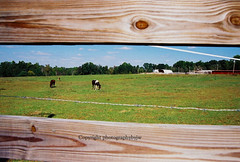 Fenced In Horses (jwhanley) Tags: blue sky horses fence frames nikon with shot north pasture carolina fenced f4 photographybyjw
